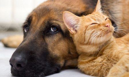 """Conferencia """"Parásitos de las mascotas y los riesgos para la salud humana"""""""