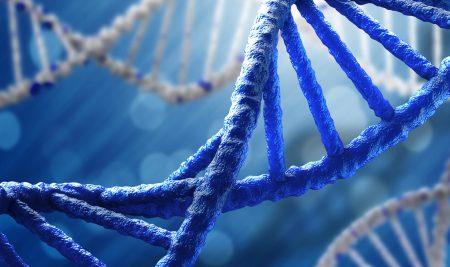 Individualidad genética y estudios de paternidad